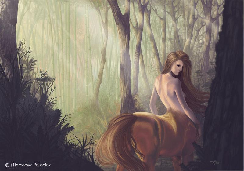centaura-forest